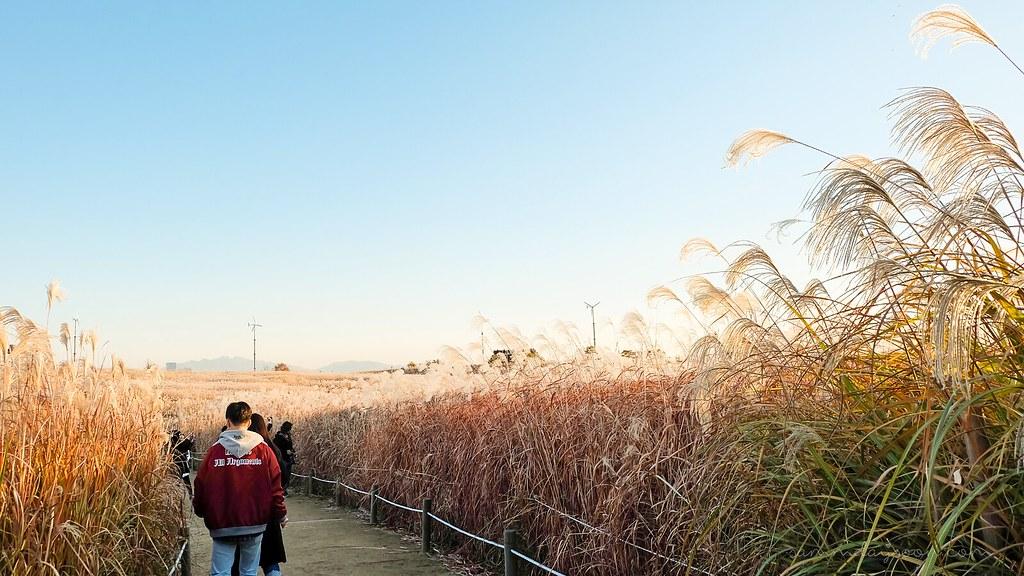 silver_grass_seoul