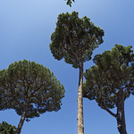 Plane Trees - https://www.flickr.com/people/36163802@N00/