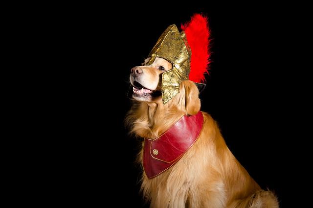 Trojan Dog? 29/52