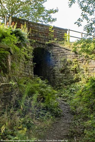 Monkey Bridge, Tenterfields.