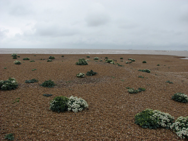The beach at Bawdsey