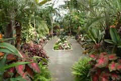 Planting Fields Arboretum (140)