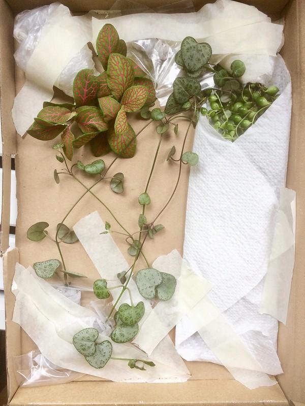 Plantenstekjes via Marktplaats