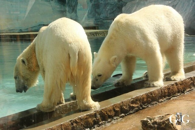 Besuch Zoo Sosto 20.06.+21.06.2018113