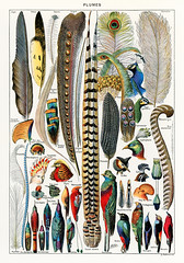 Plumes - Feathers (1900) by Adolphe Millot (1857-1921), a collection of different plume types. Digitally enhanced from our own original plate.