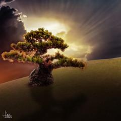 Dramatic Tree