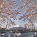 Sakura's Embrance by JKboy Jatenipat :: Travel Photographer