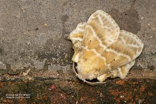 Moth - DSC_4478