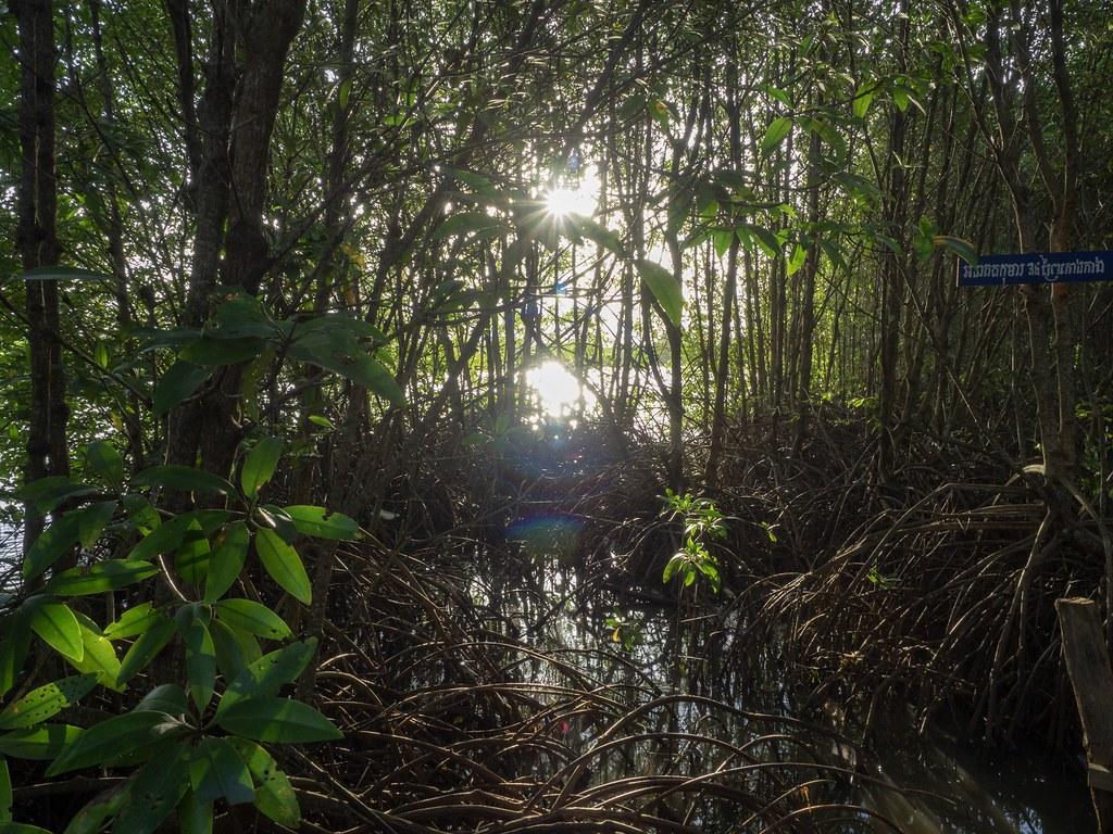 Kep mangrove