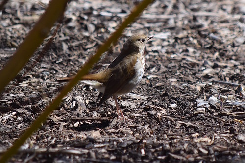 Warbler in the underbrush
