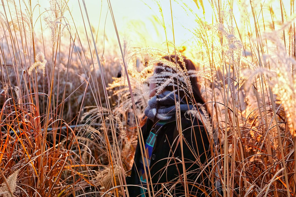 silver_grass_sunset_autumn_seoul
