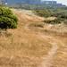 Dune slack path