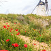 Windmill Consuegra, Spain by HellonEarth2006