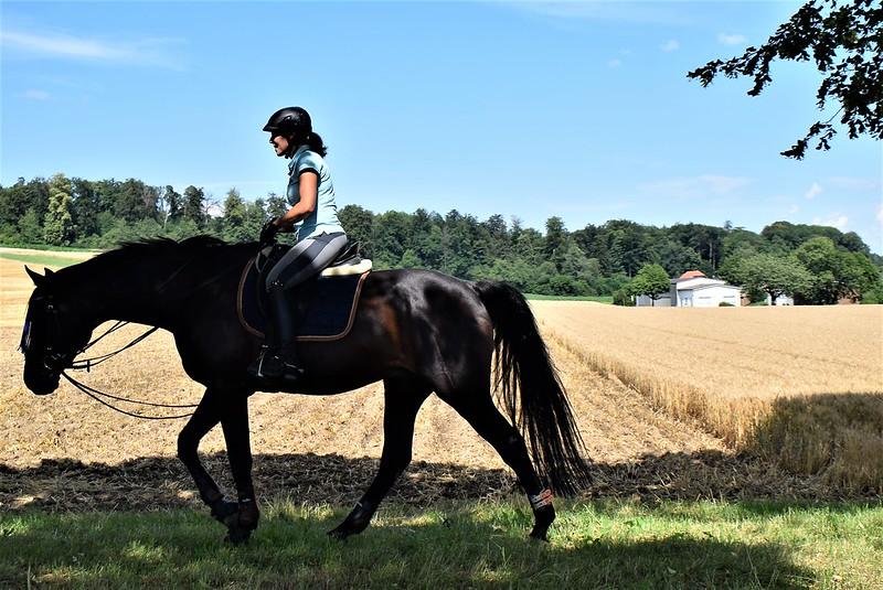 Horse 04.07 (1)