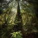 Bosque en Nueva Zelanda