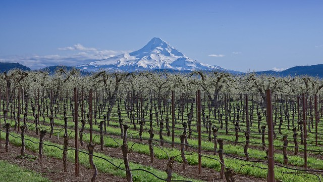 Mt Hood Vineyard Orchard, Nikon D610, Nikon AF-S Nikkor 85mm f/1.8G