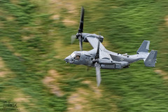 Osprey Loop