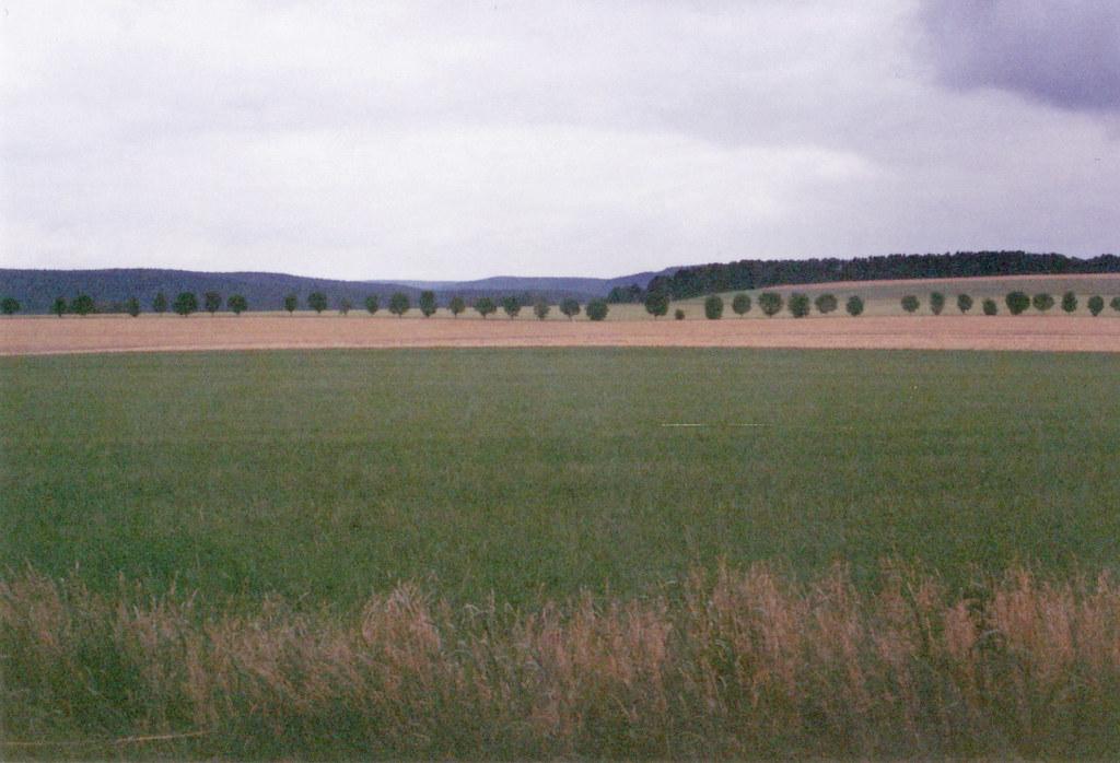 Wald und Wiese bei Gohrisch