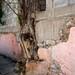 Urban Nature (San Miguel de Allende) I por Carl Campbell