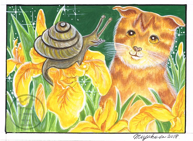 Scottish fold cat with snail and yellow iris