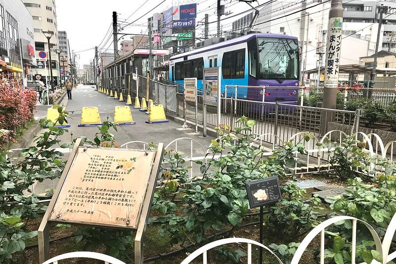 都電荒川線(東京さくらトラム) 町屋駅前のバラ