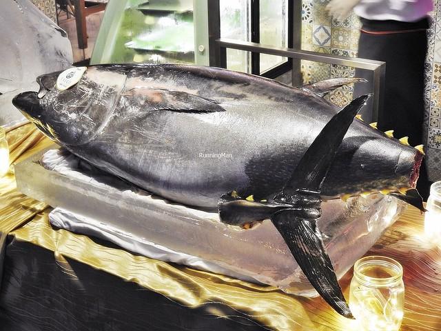 Bluefin Tuna Fish, Prepped On Ice Block
