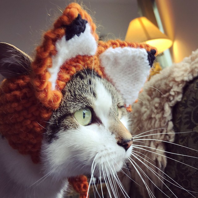 Penny in the fox hat