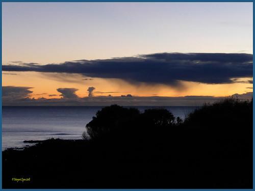 tasmania penguin foreshore sunrise