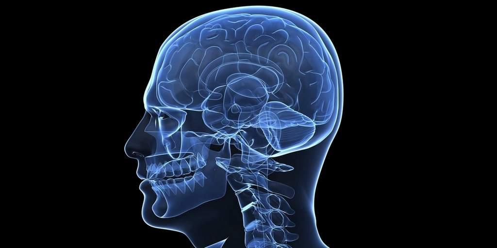 Un premier regard sur le flux du liquide interstitiel du cerveau