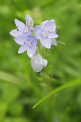 Mount Dajti National Park - flower 5