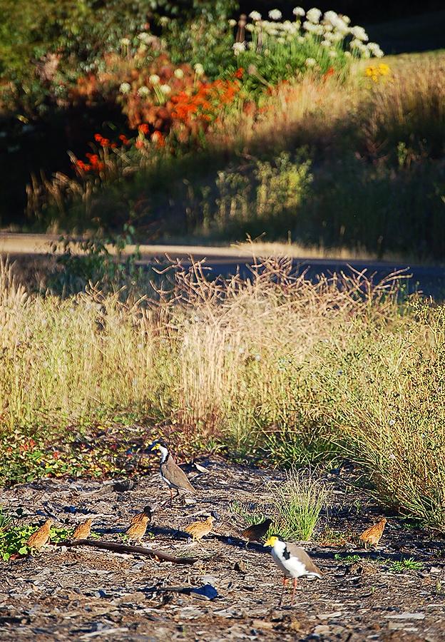 _birds crossing_
