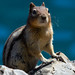 Chipmunk at Lake Minnewanka, Banff National Park by Chris-Creations