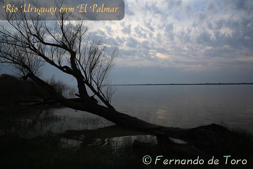 Autor: F de Toro