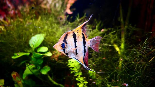 Fish - 5425