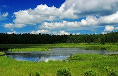 State Game Land 312 (Klondike Ponds Tract) (9)