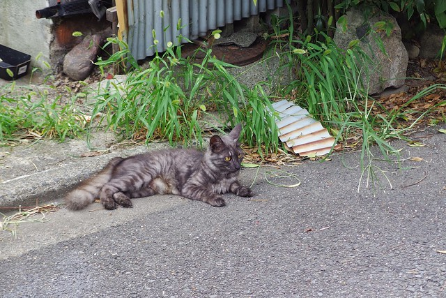 Today's Cat@2018-07-26