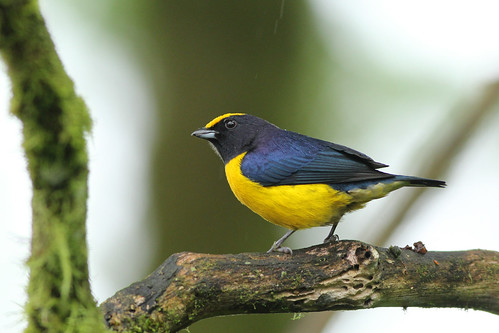 nature naturaleza birds aves pájaros passaros