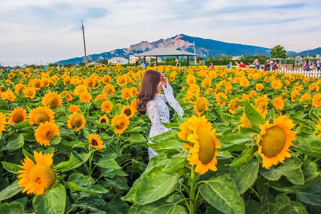 zhong-she-guan-guang-flower-market-sunflowers-alexisjetsets