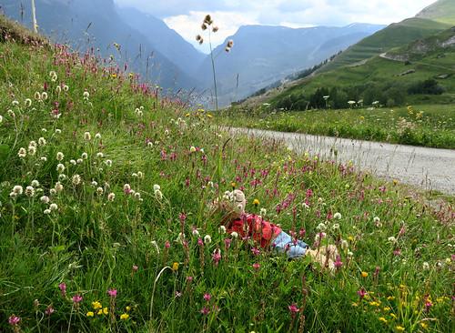 Jardin botanique alpin du Col du Lautaret dans les Hautes-Alpes (05) - Page 2 43226595021_16f794266f