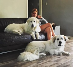 Saturday mornings. I love quiet Saturday mornings. #greatpyrenees #DogtownLife
