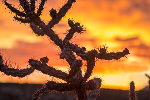 Sunset-50-7D1-062918