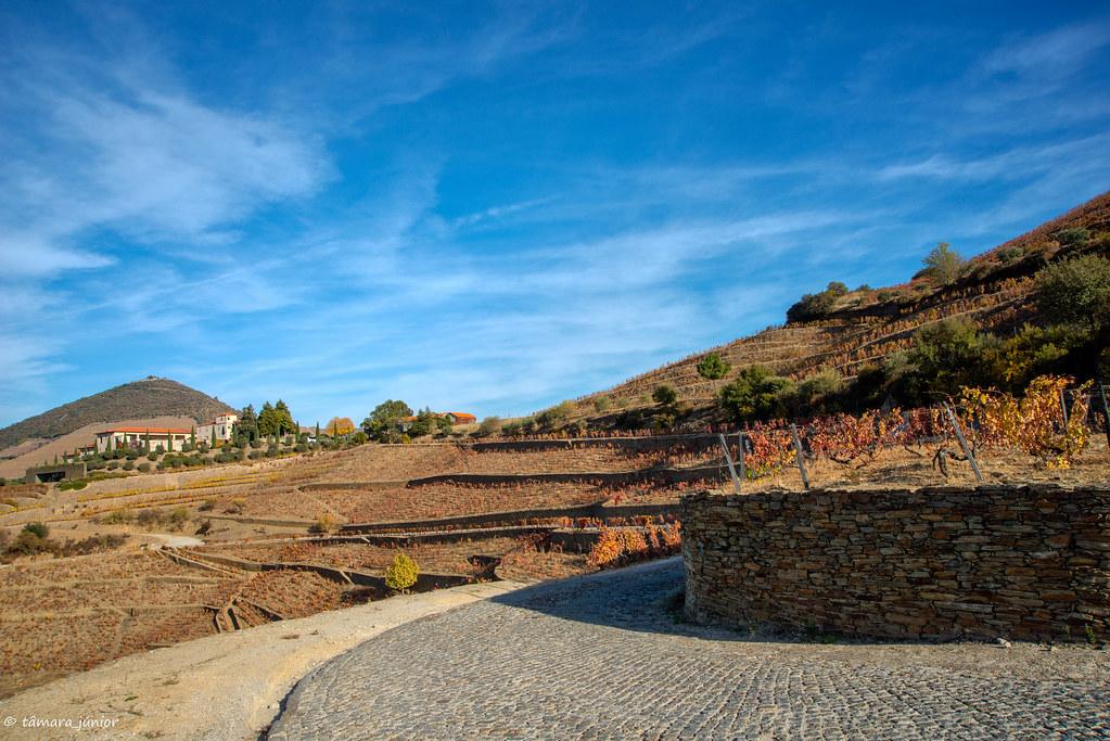 2017.- Pelo Douro no outono I (M313+N222) (122)