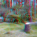 Three red squirrels at morton lochs (3d view with red/blue glasses)