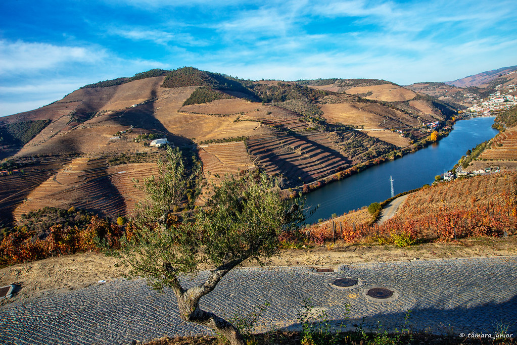 2017.- Pelo Douro no outono I (M313+N222) (149)