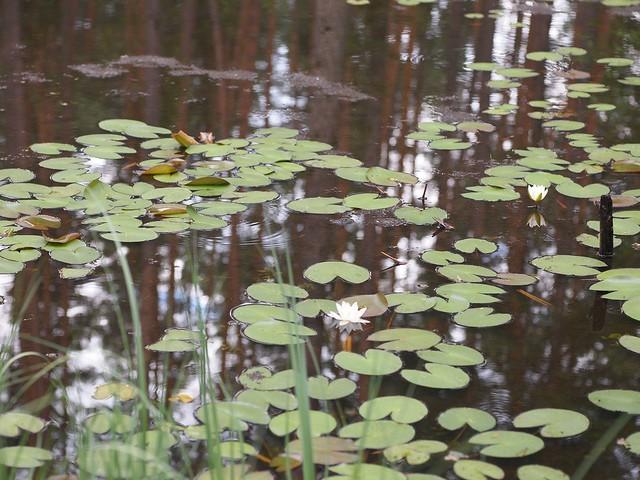 森の湖, Olympus E-PL1, Sigma 60mm F2.8 DN | A