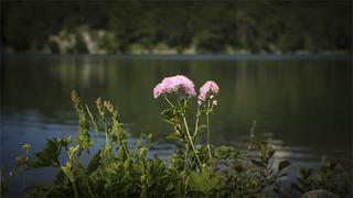 _DSC7138 Lago Santo, Emilia-Romagna / Italia