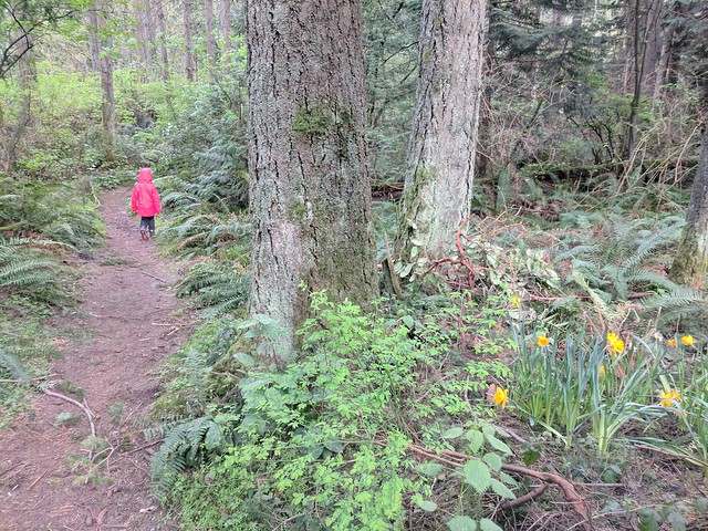 Bridle Trails Walk: Daffodils