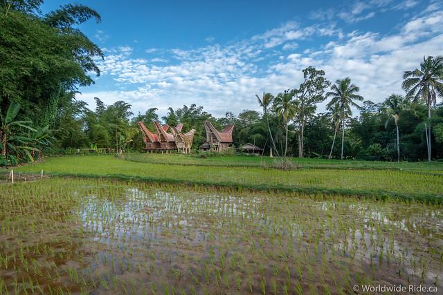 Sulawesi-96
