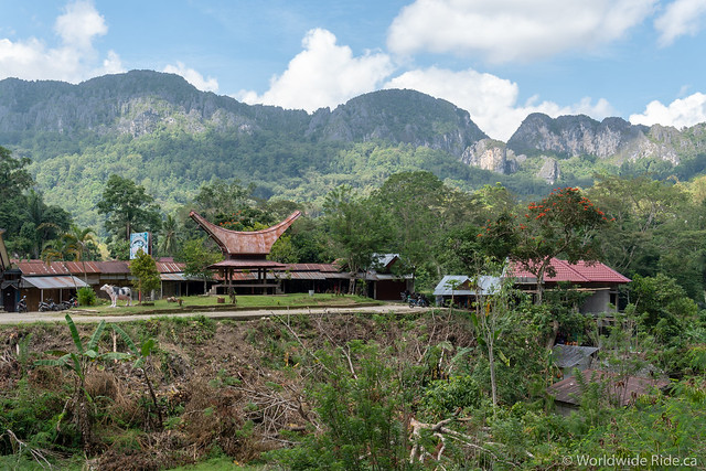 Sulawesi-78