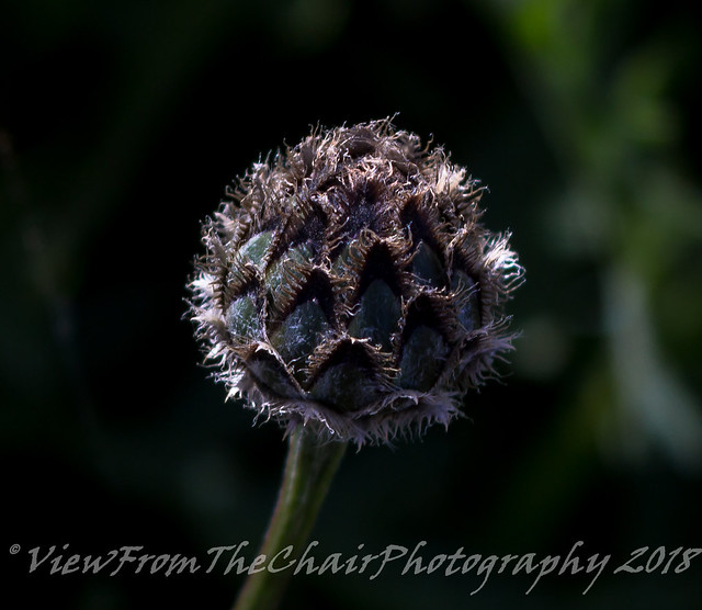 Seed Head, Canon EOS 600D, Canon EF 28-90mm f/4-5.6